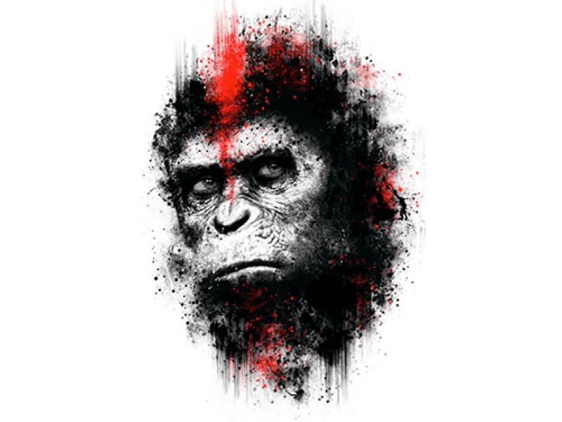 """""""Голова шимпанзе"""" Изображение для нанесения на одежду № 0902"""