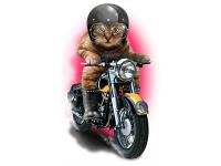 """""""Кот на мотоцикле"""" Изображение для нанесения на одежду № 1151"""