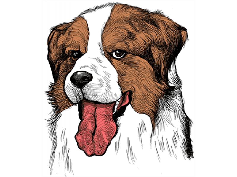 """""""Собака коричневые уши"""" Изображение для нанесения на одежду № 1203"""