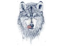 """""""Волк с языком"""" Изображение для нанесения на одежду № 1214"""